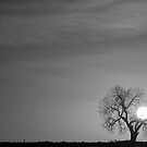 Rising Sun in Black and White by Bo Insogna
