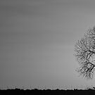 Rising Sun Panorama In Black and White by Bo Insogna