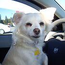 Car Ride? I'll Drive!!! by Heather Crough