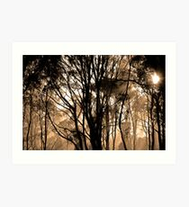 epping forest Art Print
