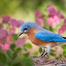 Bluebird in the Rose Garden by Bonnie T.  Barry
