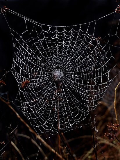 Cobweb by Samantha Higgs