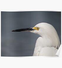 White Heron - Portrait - Garza Blanca - Retrato Poster