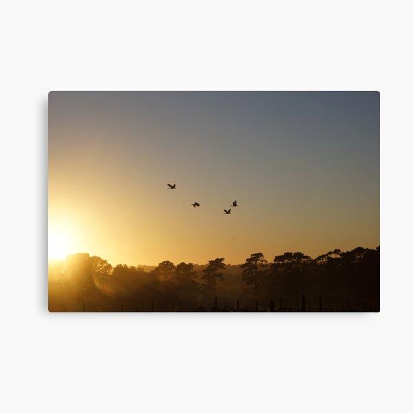 Ibis in the sky - Adelaide Hills - Fleurieu Peninsula - by South Australian artist Avril Thomas Canvas Print
