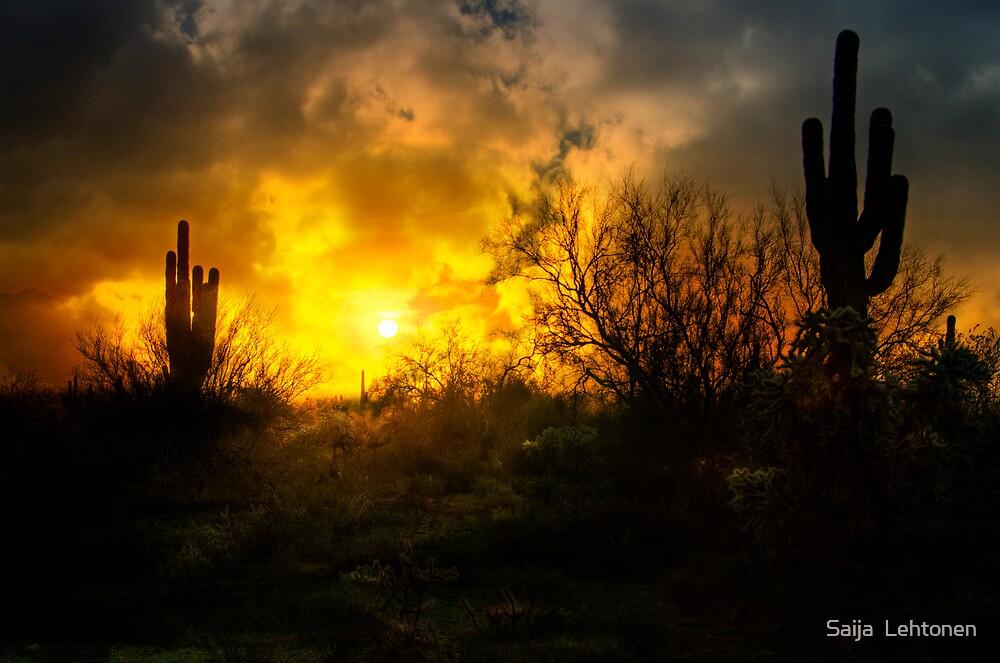 A Glorious Morning  by Saija  Lehtonen