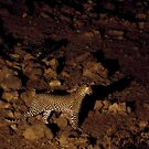 Leopard rocks by Owed To Nature
