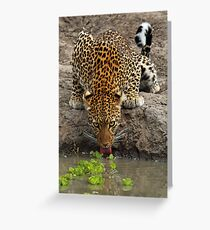 Steely stare Greeting Card