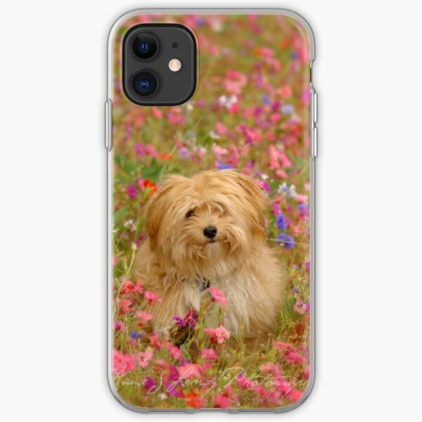 Where is Gizmo? - I Phone Case iPhone Soft Case