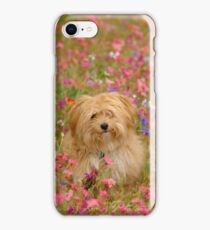 Where is Gizmo? - I Phone Case iPhone Case/Skin
