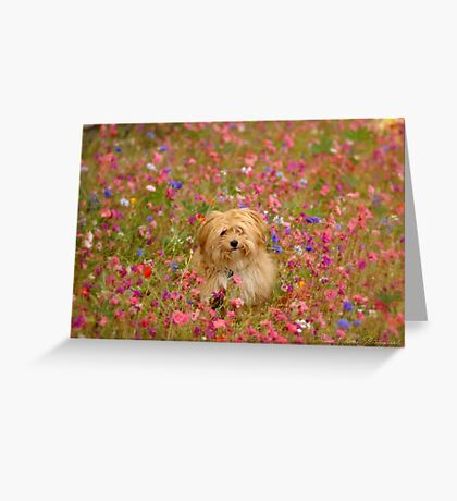 Where is Gizmo? - I Phone Case Greeting Card
