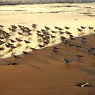 """""""Snowy Plover Convention"""" by waddleudo"""