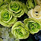 Green Roses For St Patrick's Day by Jane Neill-Hancock