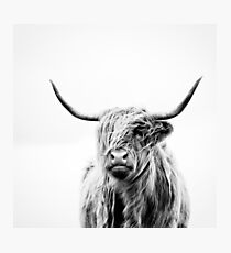 portrait of a highland cow Photographic Print