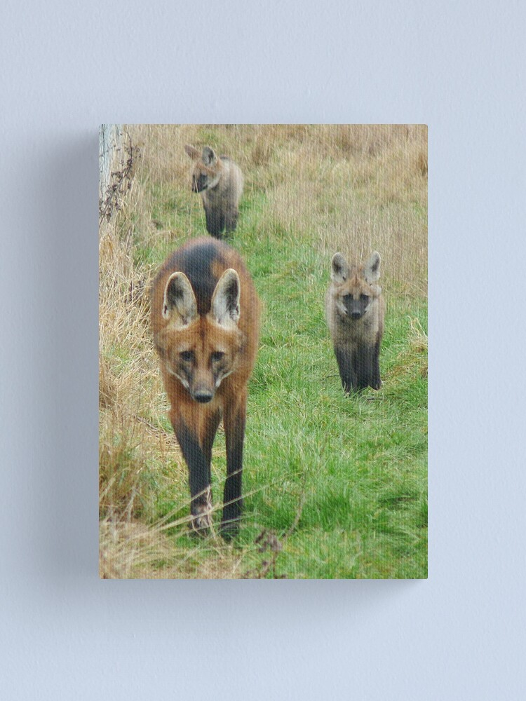 Alternate view of Maned wolf family Canvas Print