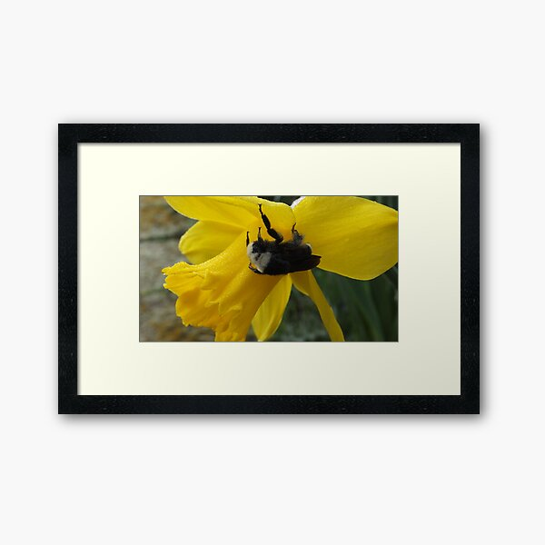 Cold Bumble Bee Framed Art Print