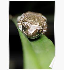 Amazon Milk Frog Poster