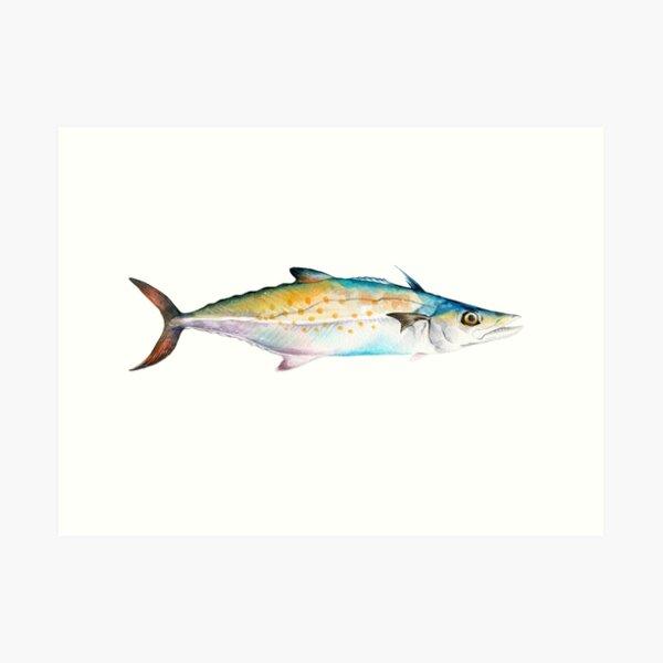 Mackerel painting Art Print