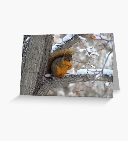 The Stare Down~ Greeting Card