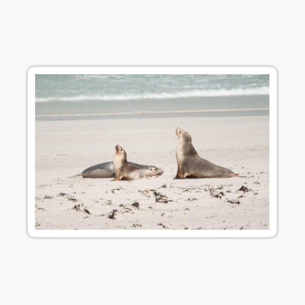 Australian Seal Pups Photography Sticker