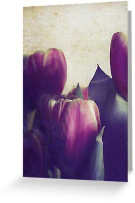 Dutch Romance by Sybille Sterk