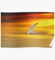 Fliegende Seeschwalbe Poster