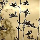 Flax by Sea-Change