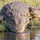 Nile Crocodile by Will Hore-Lacy