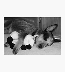 Tired Heeler Pup Photographic Print
