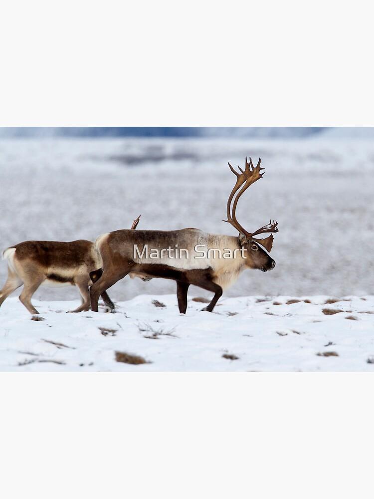 Caribou Migration by MartinSmart