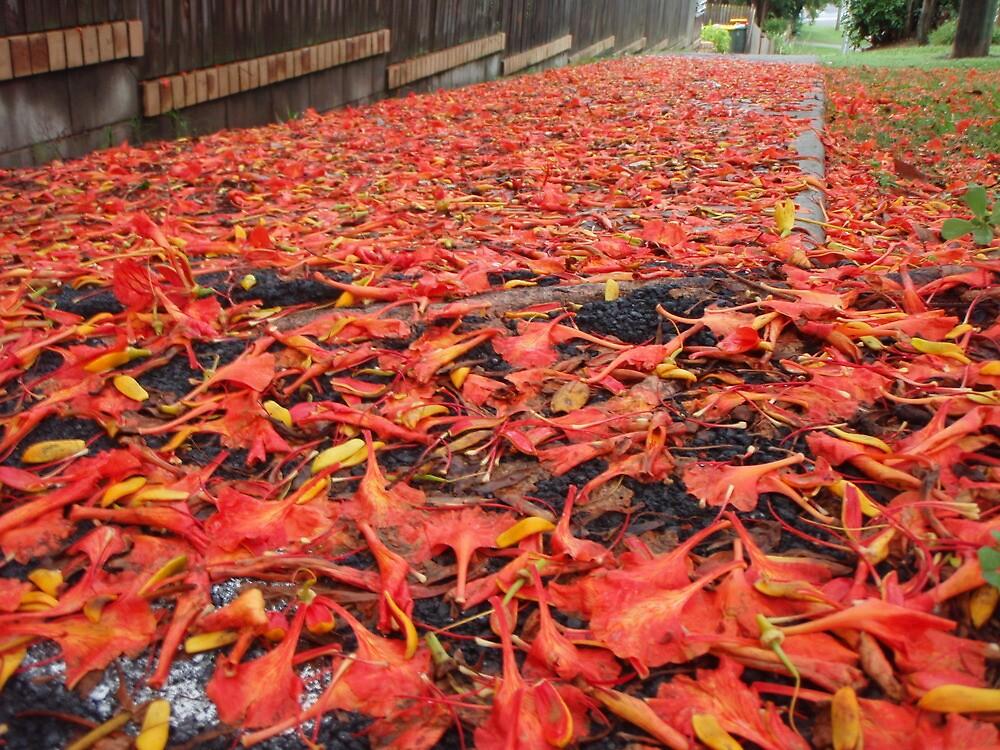Orange Summer Fall by amgmcpherson