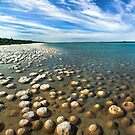 Thrombolites by thorpey