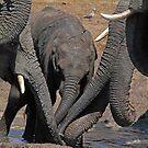 Desperate by Explorations Africa Dan MacKenzie
