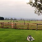 Victorian Farm Panorama by WolfieRankin