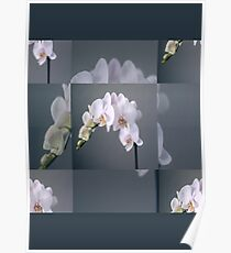 Touch Of White Flowers  Poster