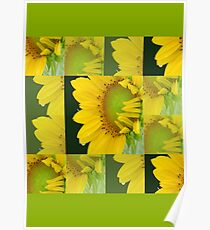 Touch Of Yellow Flowers  Poster