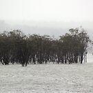 Lake Glenmaggie Dam by WolfieRankin