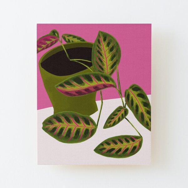 Prayer Plant on Pink Wood Mounted Print