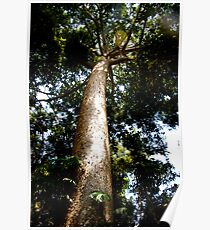 Tall Tree Poster