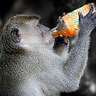 Monkey Business by frankc