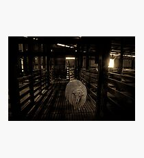 Where sheep used to roam... Photographic Print