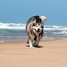 Seaspray 4 by WolfieRankin