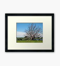 lithgow tree Framed Print