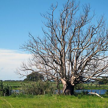 lithgow tree by zilskilnilfril
