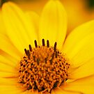 Yellow Flower by Andre Faubert