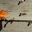 Falling Leaves by Debra Fedchin