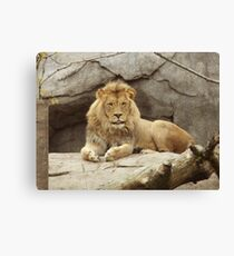 Lion - paws up Canvas Print