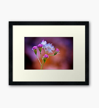 Pink Flower Framed Print