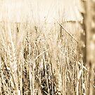 Sepia Wheat by evergleammm