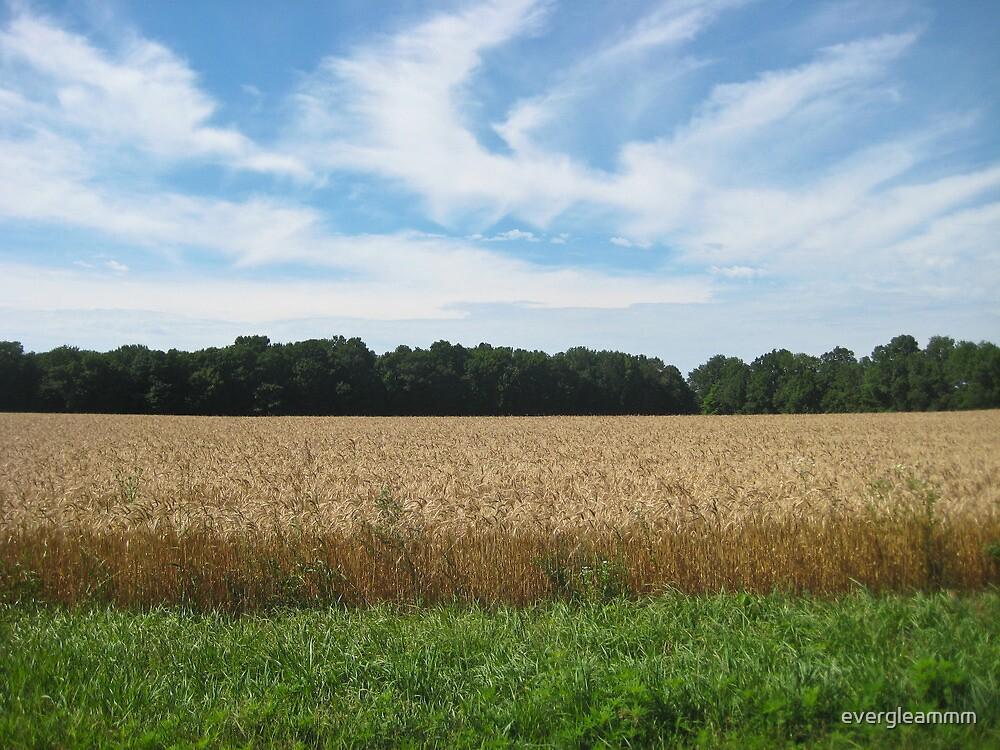Roadside Wheat field  by evergleammm