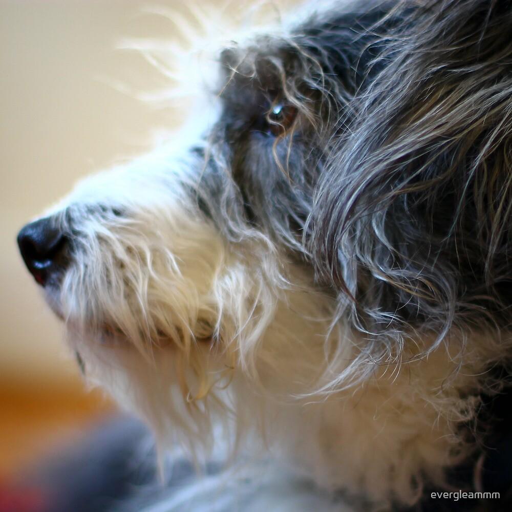 Maggie Profile by evergleammm